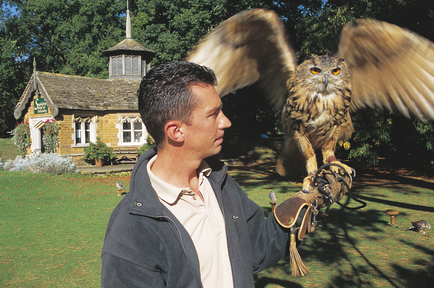 Falconry_at_Stapleford_Park_Country_House_Hotel
