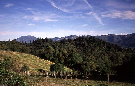 Southbridge Napa Valley 6